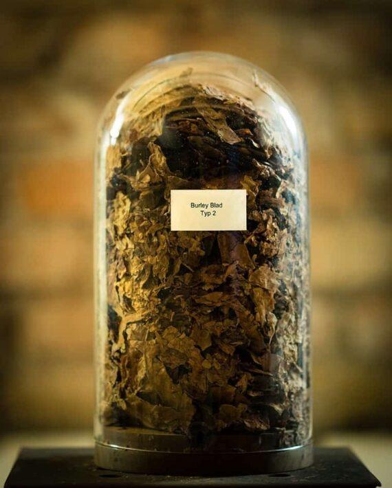 burley blad råtobak typ 2