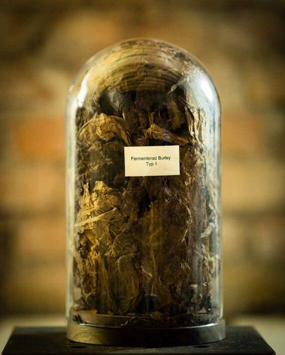Fermenterad tobak typ råtobak