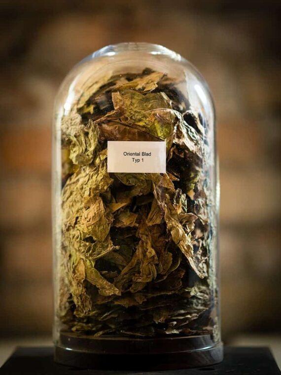 Oriental tobak från Kungssnus