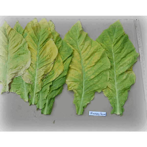 Beställ tobaksfrön Hickory Pryor från Snusfabriken.com